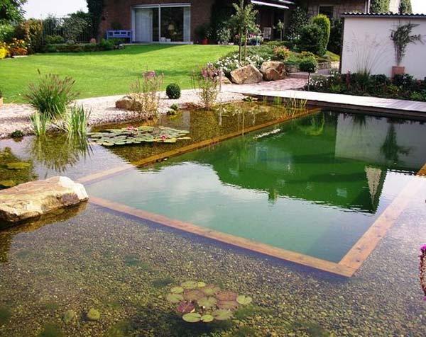 backyard-natural-swimming-pool-24