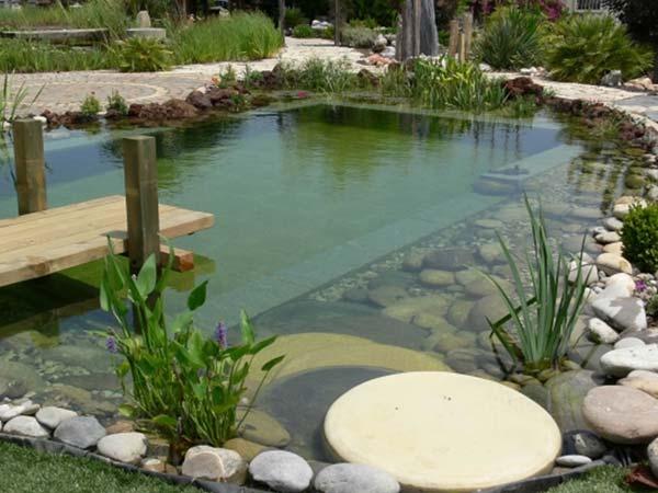 backyard-natural-swimming-pool-5