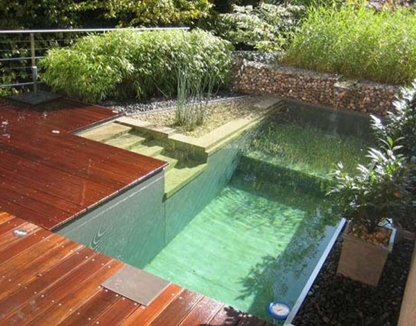 backyard-natural-swimming-pool-9