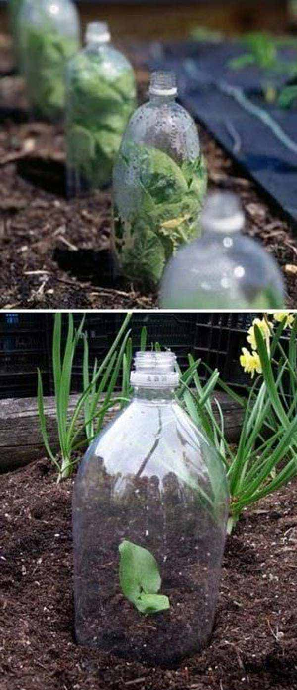 03-2-liter-soda-bottles-as-most-easy-greenhouse