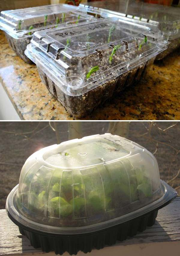 10-greenhouse-plastic-container