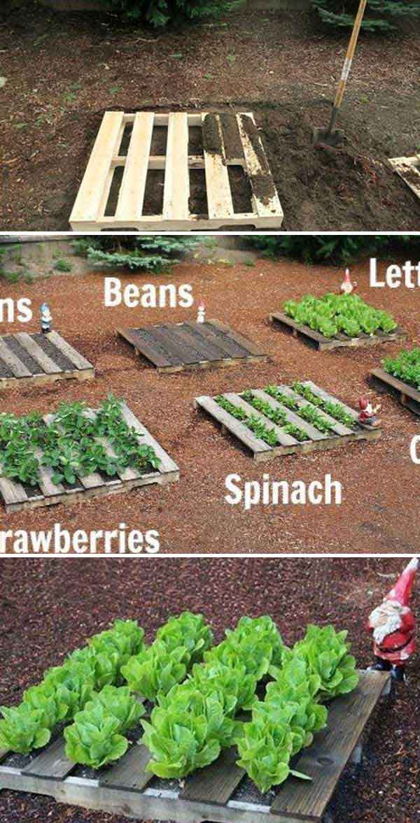 22 ways for growing a successful vegetable garden for Vegetable garden designs south africa