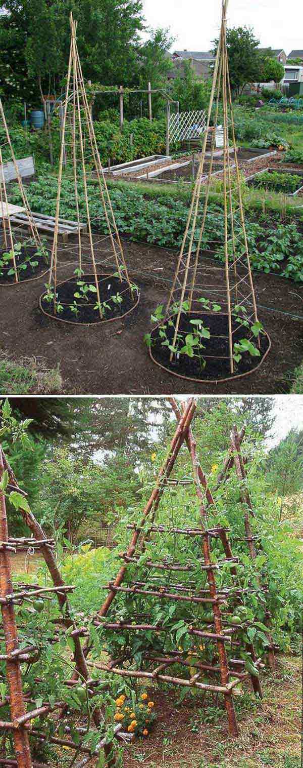 Pictures of a vegetable garden - 6 Build Pea Tepees Structure To Make The Harvesting And Maintenance More Easier