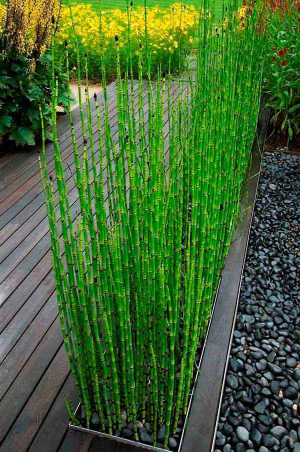 Add privacy to your garden or yard with plants amazing for Moso bamboo prezzi