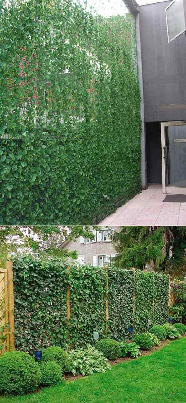 Add privacy to your garden or yard with plants amazing for Backyard privacy landscaping trees