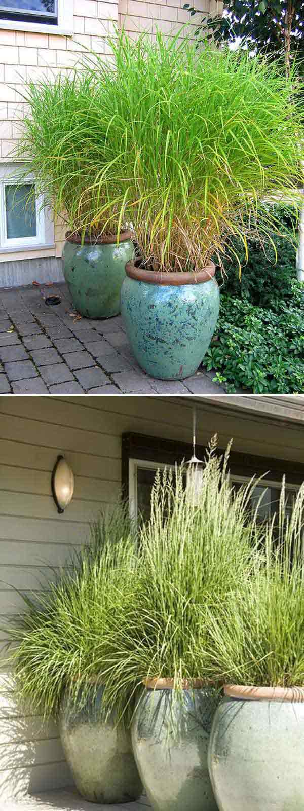 add privacy to your garden or yard with plants amazing diy