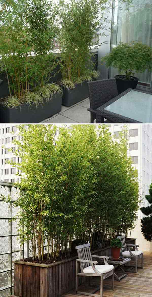 Add Privacy to Your Garden or Yard with Plants - Amazing DIY ...