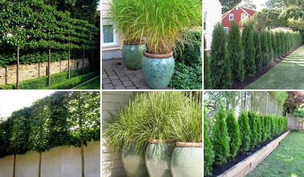 Add Privacy To Your Garden Or Yard With Plants Amazing