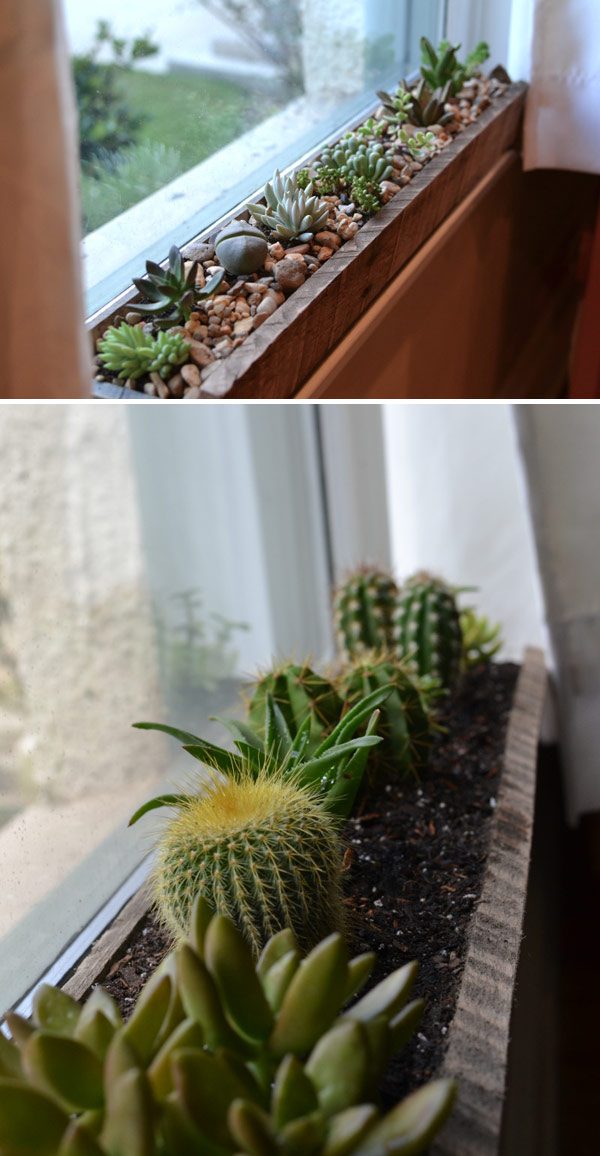 Windowsill succulent garden