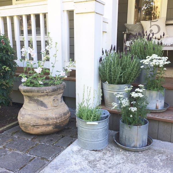 galvanized pots grouping