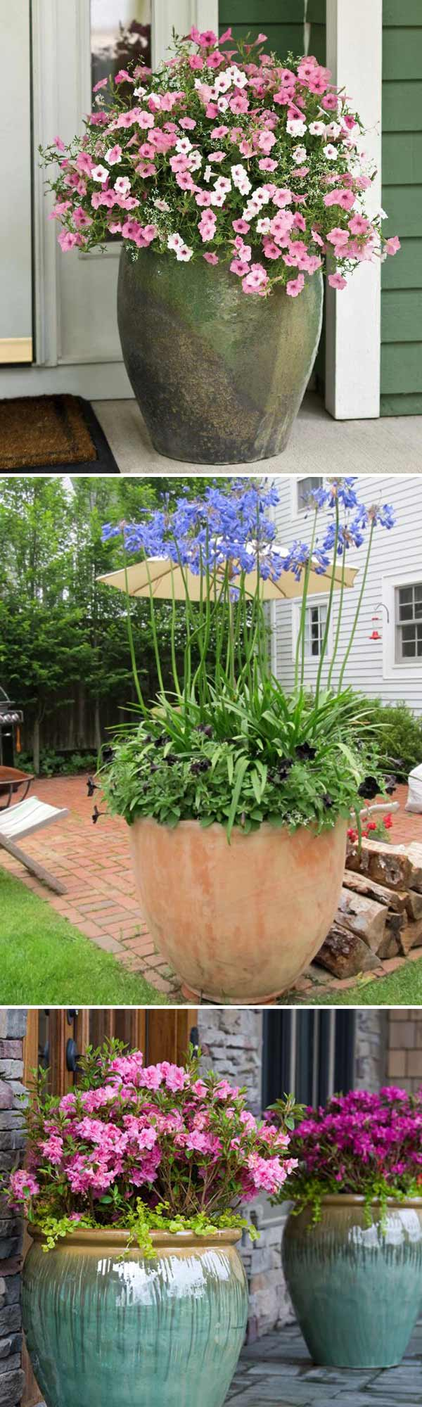 houseing your blooms in a giant glazed clay planter