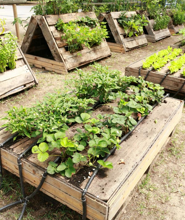 30 Amazing Ideas For Growing A Vegetable Garden In Your: Grow Your Plants In Raised Garden Beds