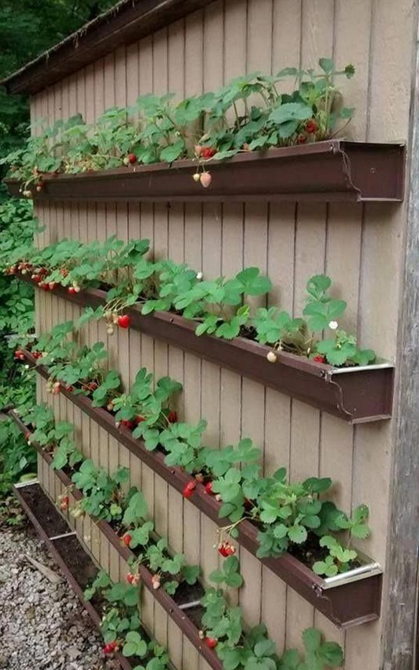 Small Space Vegetable Garden Ideas