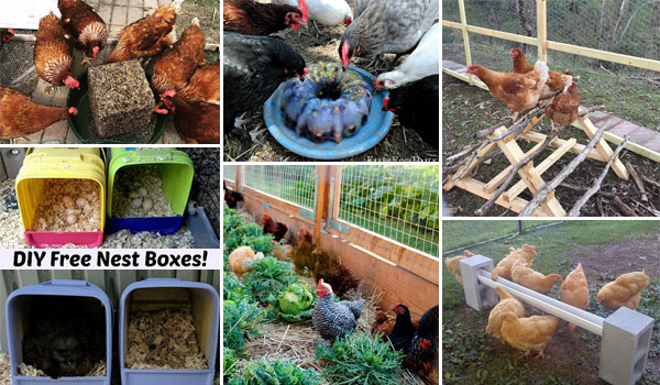 17 Easy and Cheap DIYs Help You Easily Raise Backyard Chickens