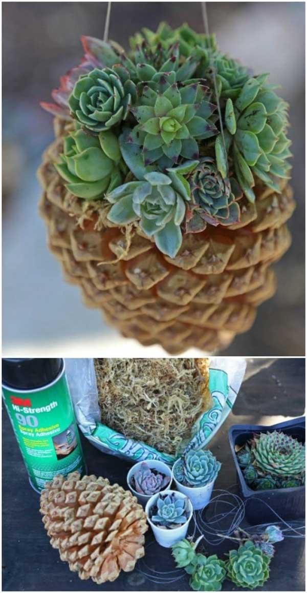 Pinecone Succulent Planters
