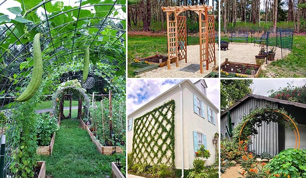 19 Best Garden Trellis Ideas and Designs